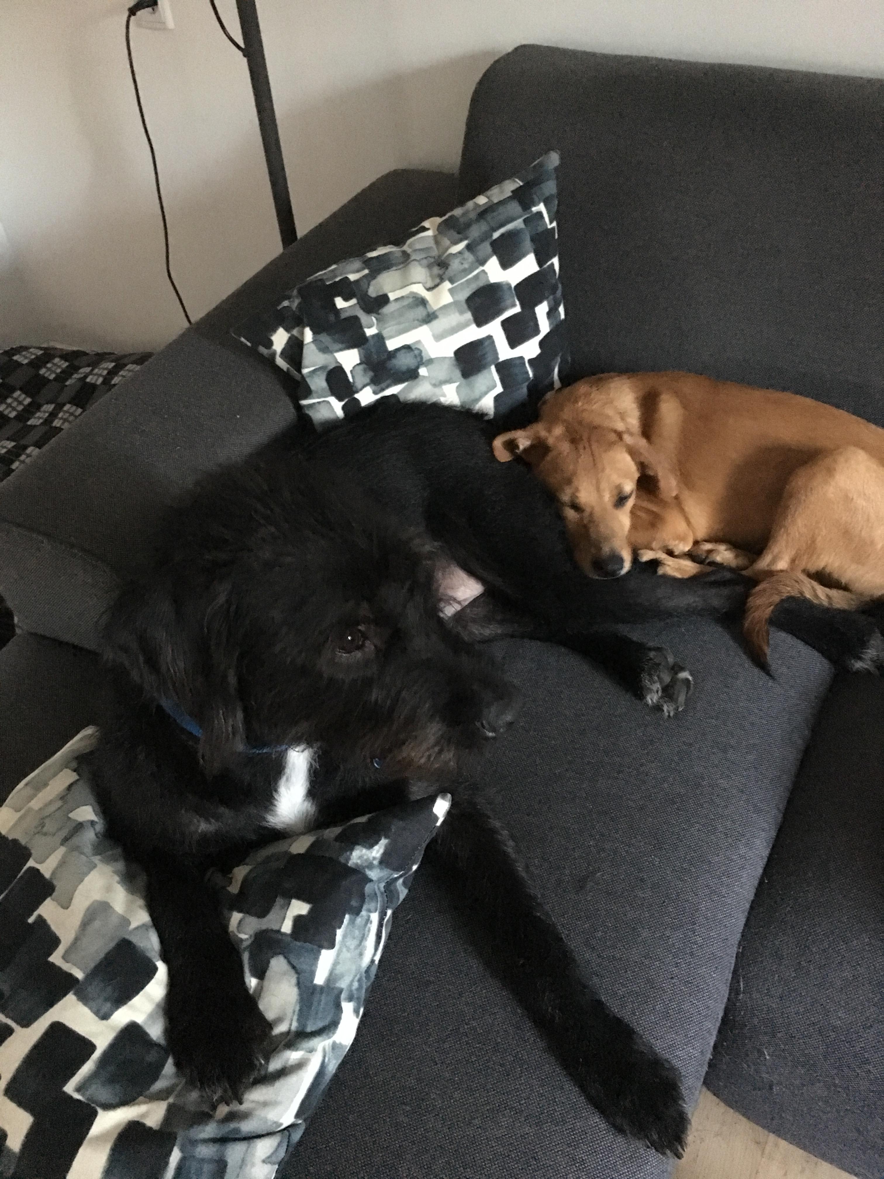 Alfred og Storebror Charlie
