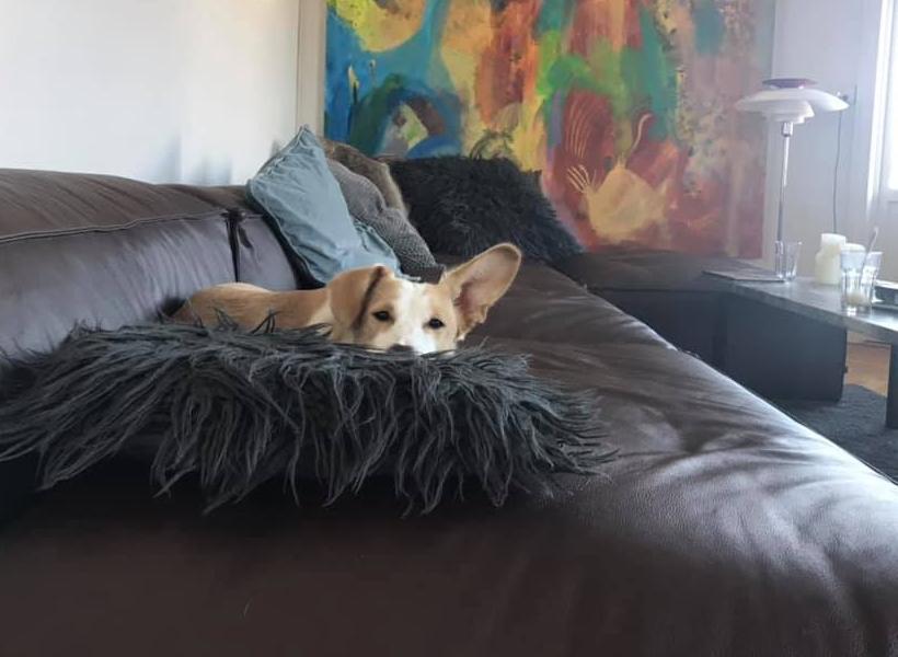 Hvordan adopterer man en hund1